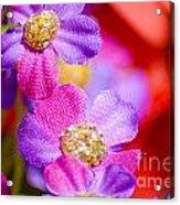 Canvas Flowers Acrylic Print