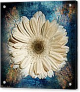 Canvas Still  Acrylic Print