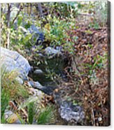 Canyon Creek Acrylic Print