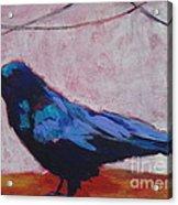 Canyon Crow Acrylic Print