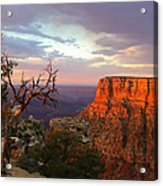 Canyon Rim Tree Acrylic Print