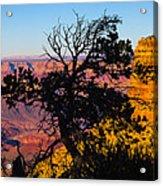 Canyon Tree Acrylic Print