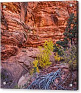 Canyon Walls Acrylic Print