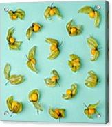 Cape Gooseberries Physalis, Winter Acrylic Print