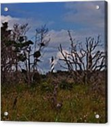 Cape Hatteras Lighthouse 1 8/20 Acrylic Print