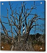 Cape Hatteras Lighthouse Through The Trees 3/01 Acrylic Print
