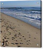 Cape Hatteras - Mermaid's Purse Laiden Beach Acrylic Print