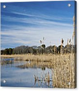 Cape May Marshes Acrylic Print