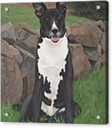 Capone Acrylic Print by Sandra Chase