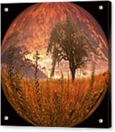 Captured Flame Acrylic Print by Debra and Dave Vanderlaan