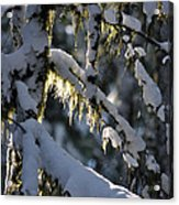 Capturing The Warmth Acrylic Print