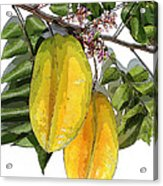 Carambolas Starfruit Two Up Acrylic Print