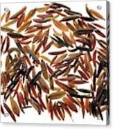 Caraway Seeds Acrylic Print