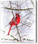 Cardinal Christmas-2014 Acrylic Print