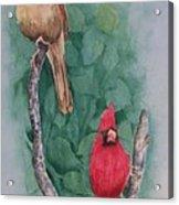 Cardinal Companions Acrylic Print