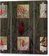 Cardinal Family Acrylic Print