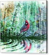 Cardinal - Featured In Comfortable Art-wildlife-and Nature Wildlife Groups Acrylic Print