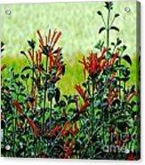 Cardinal Flowers Acrylic Print