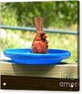 Cardinal Frisbee Acrylic Print