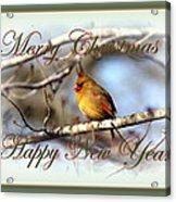 Cardinal - Lady At Christmas Acrylic Print