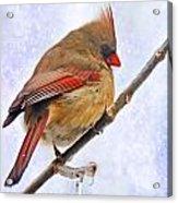 Cardinal On An Icy Twig - Digital Paint Acrylic Print