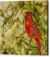 Cardinal Singing Acrylic Print