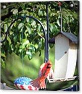 Cardinal Tail Wide Landing Digital Art Acrylic Print
