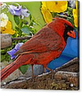 Cardinal With Pansies And Decorations Photoart Acrylic Print
