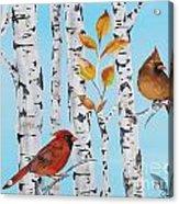 Cardinals Among The Birch-d Acrylic Print