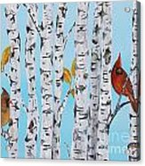 Cardinals Among The Birch-e Acrylic Print