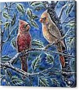 Cardinals And Holly Acrylic Print