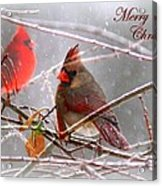 Cardinals - Male And Female - Img_003card Acrylic Print