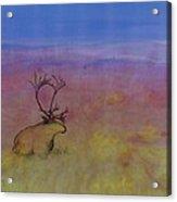 Caribou On The Tundra Acrylic Print