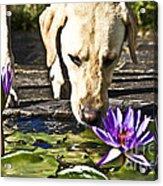 Carla's Dog Acrylic Print