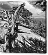 Carmel Beach City Park Black And White Acrylic Print