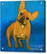 Carmen French Bulldog Acrylic Print