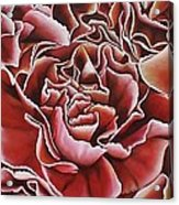 Carnations Acrylic Print