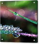 Carnival Of Color Acrylic Print