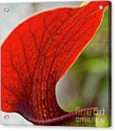 Carnivorous Plants 2 Acrylic Print