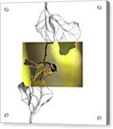 Carolina Chickadee Acrylic Print
