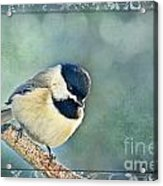 Carolina Chickadee With Decorative Frame I Acrylic Print