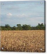 Carolina Field Acrylic Print