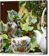Carolina Wren And Tea Cups Acrylic Print