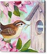 Carolina Wren In Springtime Acrylic Print