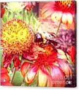Carpenter Bee No. 4 Acrylic Print