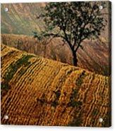 Carpet Fields Of Moravia Acrylic Print