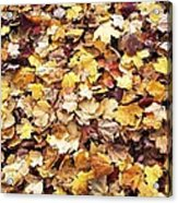Carpet Of Leafs Acrylic Print