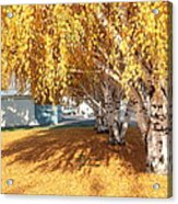 Carpet Of Yellow Leaves Acrylic Print