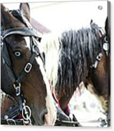 Carriage Horse - 5 Acrylic Print