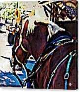 Carriage Horse Acrylic Print